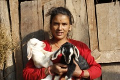 Goat-Rearing-by-Women-Group-Member-at-Dandakharka-Makawanpur-1-Medium