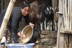 Goat-Rearing-by-Women-Group-Member-at-Manahari-Makawanpur-Medium