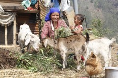 Goat-Rearing-by-Women-Group-Member-at-Samundratar-Medium