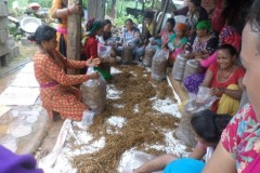 Mushroom-Farming-Training-in-Makawanpur-Medium