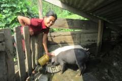 Pig-Rearing-by-Women-Group-Member-at-Dandakharka-Makawanpur-1-Medium