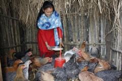 Poultry-Rearing-by-Women-Group-Member-At-Dandakharka-Makawanpur-2-Medium