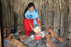 Poultry-Rearing-by-Women-Group-Member-At-Dandakharka-Makawanpur-4-Medium