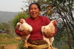 Poultry-Rearing-by-Women-Group-Member-at-Talakhu-Nuwakot-Medium