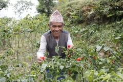 Vegetable-Farming-by-Farmer-Group-Members-at-Dandakharka-Makawanpur-1-Medium