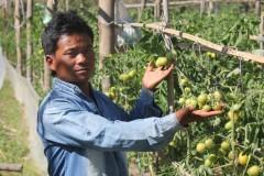 Vegetable-Farming-by-Farmer-Group-Members-at-Dandakharka-Makawanpur-3-Medium