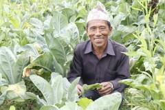 Vegetable-Farming-by-Farmer-Group-Members-at-Dandakharka-Makawanpur-8-Medium