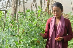 Vegetable-farming-by-Women-Group-Member-at-Kogate-Makawanpur-Medium