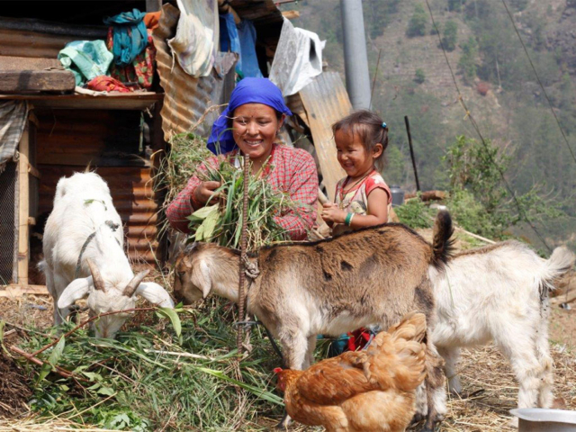 Goat Rearing by Samjhana Tamang, Sunaulo Dhandakharka WAG, Samundratar (8)