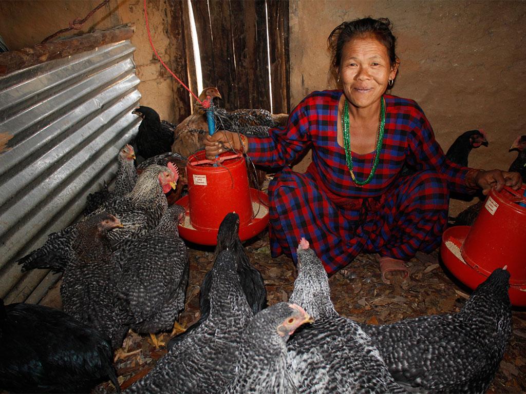 Poultry Rearing by Women Group Member at Dandakharka, Makawanpur (2)