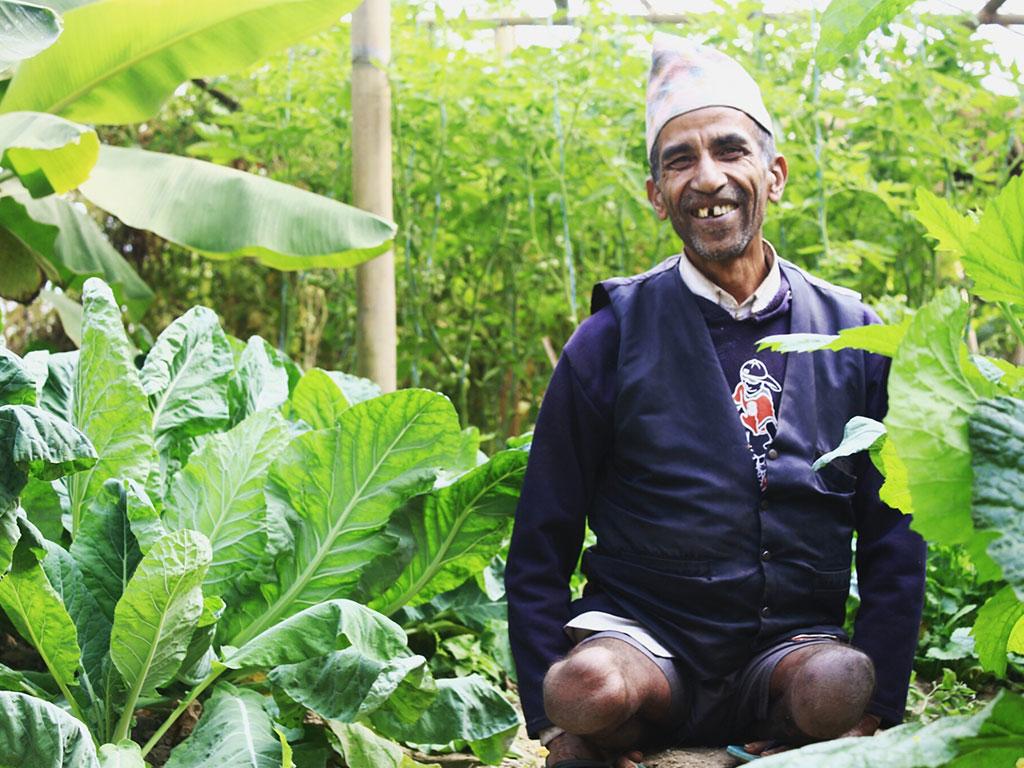 Punnya Prasad Pokharel(People with Disability)'s Vegetable Farm-Mahakali, Nuwakot
