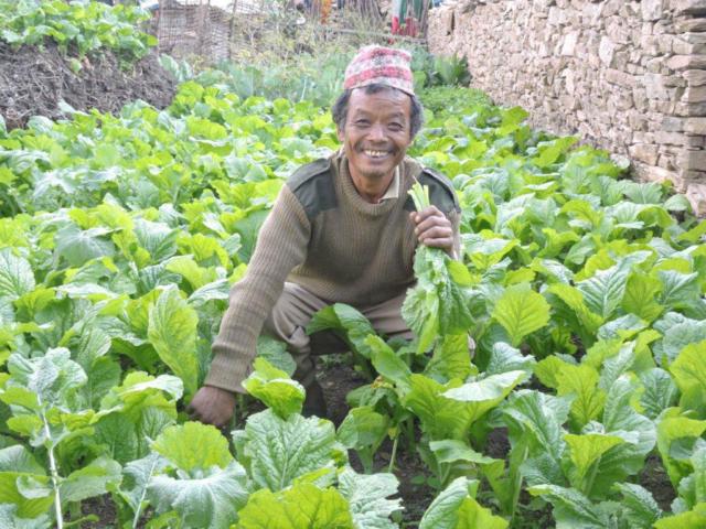 Vegetable Farming By Kamising Tamang At Likhu, Nuwakot
